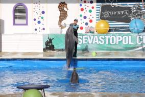 Sevastopol Cup открытие . Дельфинарий.